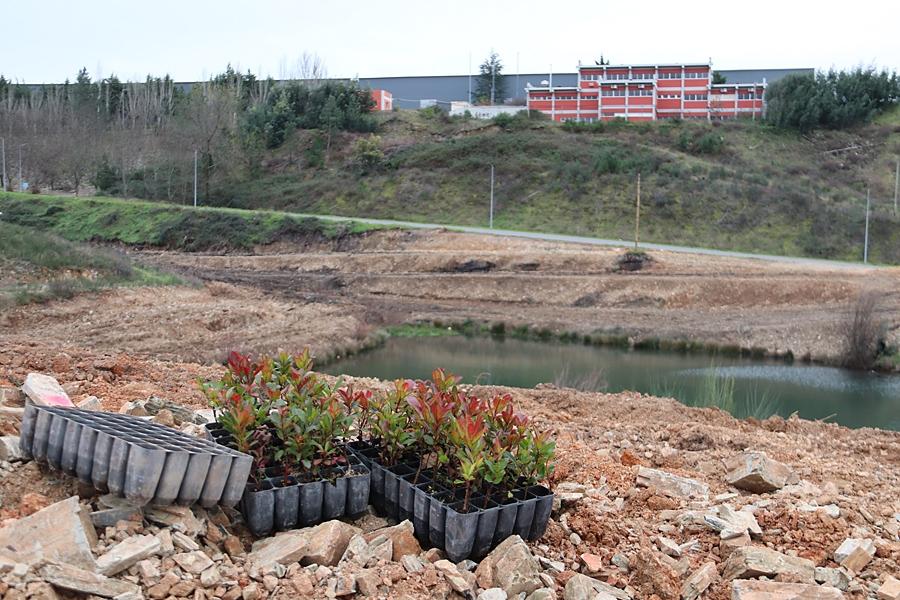 Proença vai reflorestar quatro hectares de terreno junto ao Parque Empresarial