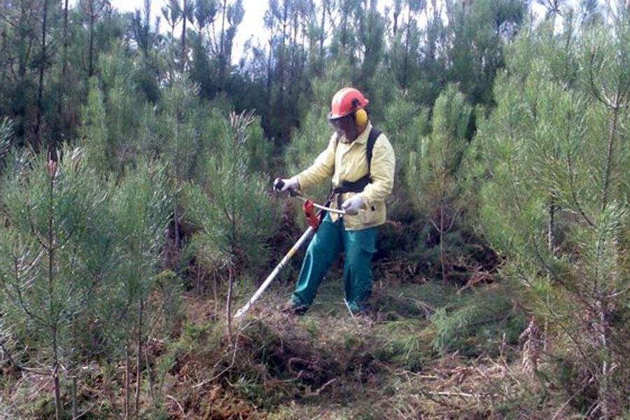 """Ministro considera """"contraproducente"""" prorrogar limpeza de terrenos até 31 de maio"""