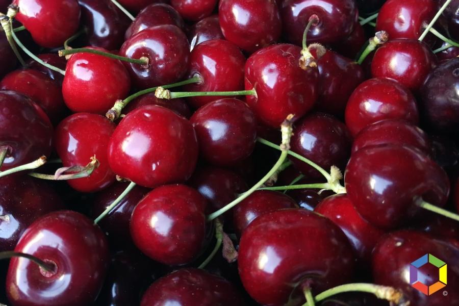 Produção de cereja deve triplicar este ano face a 2020