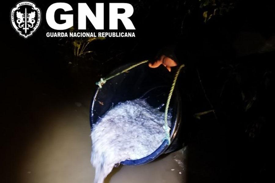 GNR deteve três homens, equipamento e 8,5 quilos de meixão na Nazaré