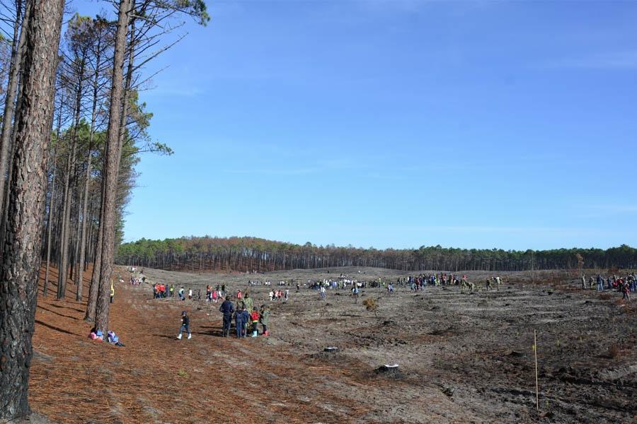 400 alunos de Leiria e Marinha Grande iniciam reflorestação do Pinhal do Rei